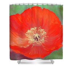 Poppy 22 Shower Curtain by Pamela Cooper