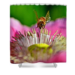 Poppy And A Bee 006 Shower Curtain by George Bostian