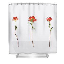 Poppy Blossoms Shower Curtain by Brittany Bevis
