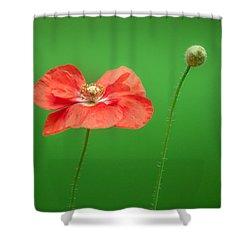 Poppy Shower Curtain by Bulik Elena