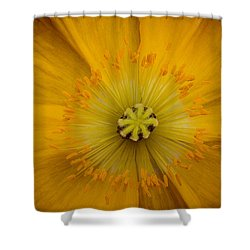 Shower Curtain featuring the photograph Poppy by Cathy Donohoue