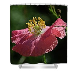 Poppy Close-up Shower Curtain