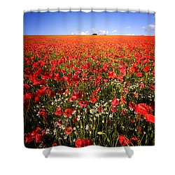 Poppy Field Shower Curtain by Meirion Matthias