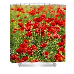 Poppy Field Shower Curtain by Thomas M Pikolin