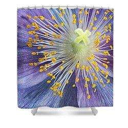 Poppy Fireworks Shower Curtain