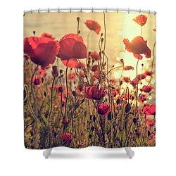 Poppy Flowers At Sunset Shower Curtain