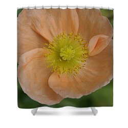 Poppy Shower Curtain
