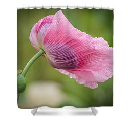 Poppy In The Wind Shower Curtain