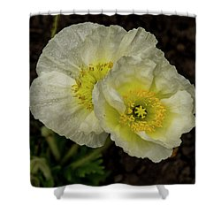 Shower Curtain featuring the photograph Poppy Pair by Jean Noren