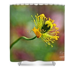 Poppy Seed Capsule Shower Curtain by Kaye Menner
