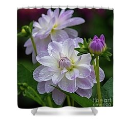 Porcelain Dahlia With Dewdrops Shower Curtain