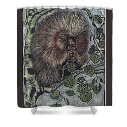 Shower Curtain featuring the drawing Porcupine In Aspen by Dawn Senior-Trask