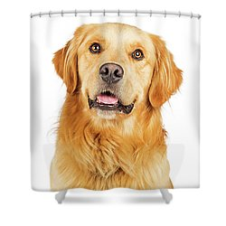 Portrait Happy Purebred Golden Retriever Dog Shower Curtain