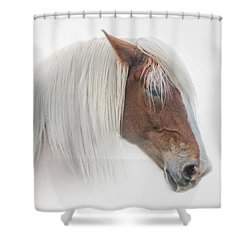 Portrait Of A Belgian Horse Shower Curtain