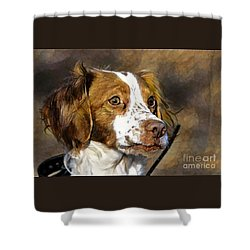 Shower Curtain featuring the photograph Portrait Of A Brittany - D009983-a by Daniel Dempster