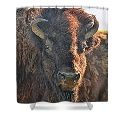 Portrait Of A Buffalo Shower Curtain by Nancy Landry