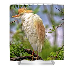 Portrait Of A Cattle Egret Shower Curtain