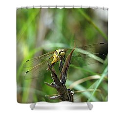 Portrait Of A Dragonfly Shower Curtain