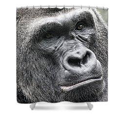 Portrait Of A Gorilla Shower Curtain