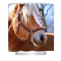 Shower Curtain featuring the photograph Portrait Of A Haflinger - Niko by Angela Rath