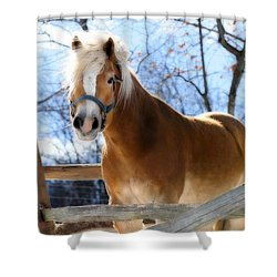 Portrait Of A Haflinger - Niko In Winter Shower Curtain