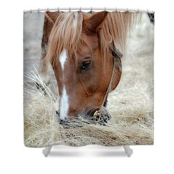 Portrait Of A Horse Shower Curtain by Brenda Bostic