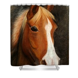 Portrait Of A Horse Shower Curtain by Jasna Dragun