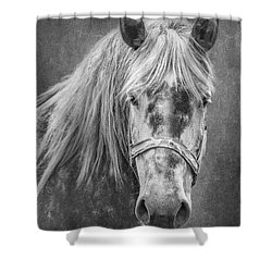 Shower Curtain featuring the photograph Portrait Of A Horse by Tom Mc Nemar