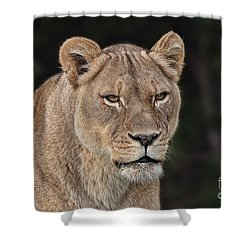 Portrait Of A Lioness II Shower Curtain by Jim Fitzpatrick