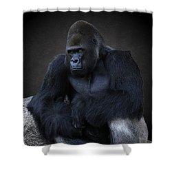 Portrait Of A Male Gorilla Shower Curtain