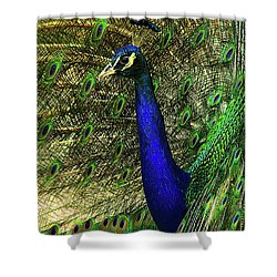 Shower Curtain featuring the photograph Portrait Of A Peacock by Jessica Brawley