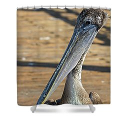 Portrait Of A Pelican On The Pier Shower Curtain