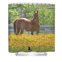 Portrait Of A Quarter Horse Shower Curtain by Donna Kennedy