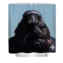 Portrait Of A Raven Shower Curtain