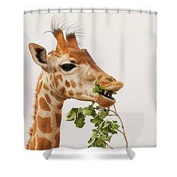 Shower Curtain featuring the photograph Portrait Of A Rothschild Giraffe IIi by Nick Biemans