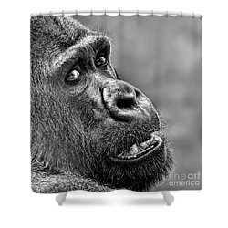 Portrait Of A Silverback Shower Curtain by Jim Fitzpatrick