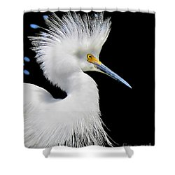 Portrait Of A Snowy White Egret Shower Curtain by Jennie Breeze