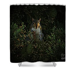 Portrait Of A Squirrel Shower Curtain
