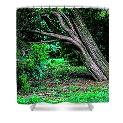 Shower Curtain featuring the photograph Portrait Of A Tree by Madeline Ellis