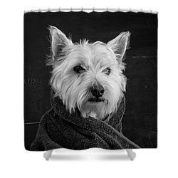 Shower Curtain featuring the photograph Portrait Of A Westie Dog 8x10 Ratio by Edward Fielding