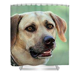 Portrait Of A Yellow Labrador Retriever Shower Curtain by Sheila Brown
