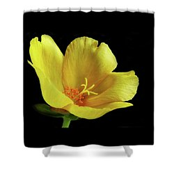 Shower Curtain featuring the photograph Portrait Of A Yellow Purslane Flower by David and Carol Kelly