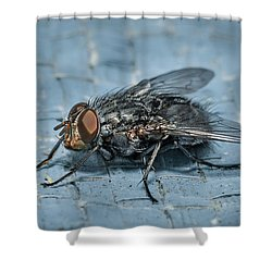 Portrait Of A Young Insect As A Fly Shower Curtain
