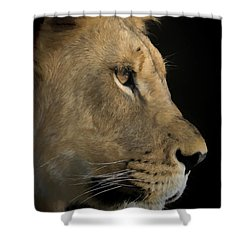 Shower Curtain featuring the digital art Portrait Of A Young Lion by Ernie Echols