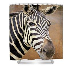 Portrait Of A Zebra Shower Curtain by Rosalie Scanlon
