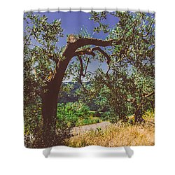 Portrait Of An Olive Tree Shower Curtain