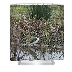 Portrait Of Beautiful Lapwing Bird Seen Through Reeds On Side Of Shower Curtain by Matthew Gibson