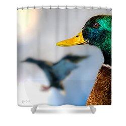 Portrait Of Duck 2 Shower Curtain by Bob Orsillo