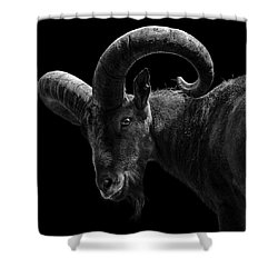 Portrait Of East Caucasian Tur In Black And White  Shower Curtain