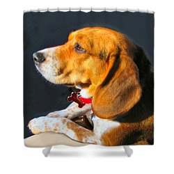 Portrait Of Pebbles - The Independent Beagle Shower Curtain